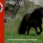 Zwitsers Shetland Pony Stamboek